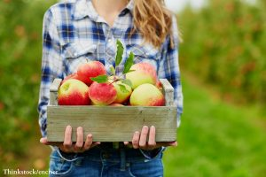 things to do in the poconos in the fall - pick apples
