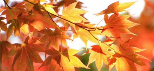 poconos fall foliage