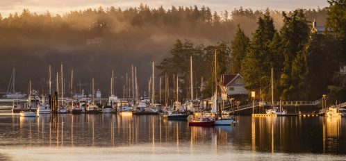 Salboats sitting in a marina with fog rolling over the forested, mountainous landscape
