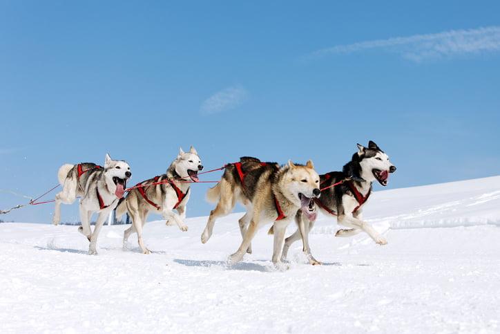 Book a dog sledding in the Poconos experience!